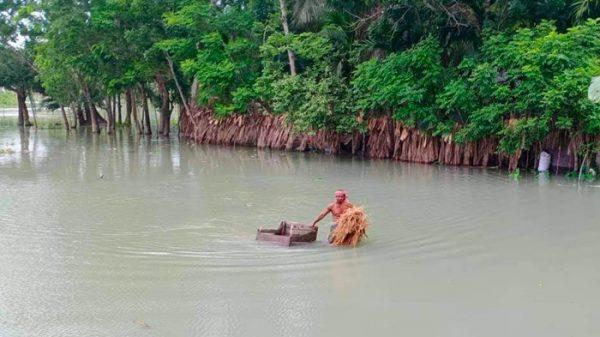 কাউখালীতে টানা বৃষ্টিতে তলিয়ে গেছে নিম্নাঞ্চল