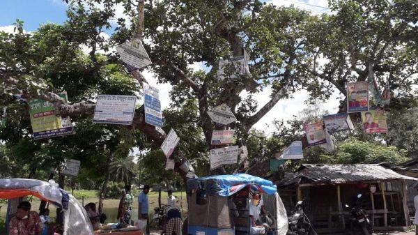 তালতলীতে এক বটগাছেই ২০ কেজি পেরেক