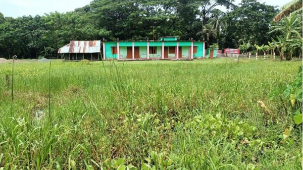 মির্জাগঞ্জে স্কুলমাঠে পানি ও কচুরিপানার জঙ্গল