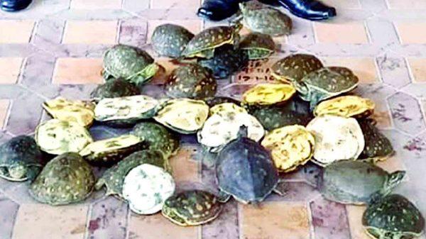 বরিশালে বিআরটিসির বাস থেকে পরিত্যক্ত অবস্থায় ৩৫টি কচ্ছপ উদ্ধার